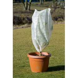 frostbeskyttelse af planter
