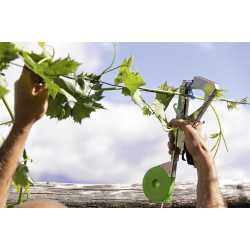 Bindetang maxtang opbindingstang vinplanter